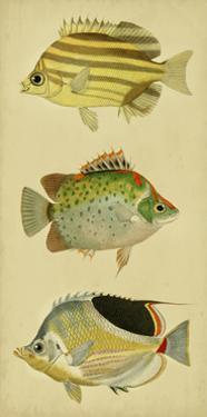 Trio of Tropical Fish I
