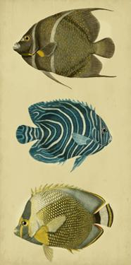 Trio of Tropical Fish III