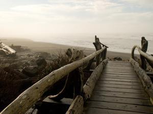 Driftwood Bridge Entrance from Trail, Kalaloch Beach, Olympic National Park, Washington, USA by Trish Drury