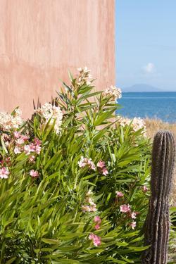 Mexico, Baja California Sur. Loreto Bay. Cactus, flowering plants. by Trish Drury