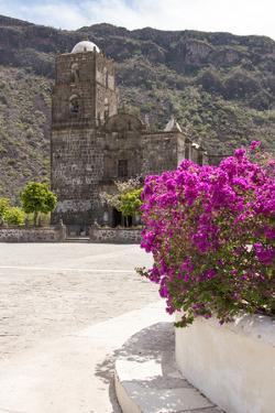 Mexico, Baja California Sur, Sea of Cortez. Mission San Francisco Javier with bougainvillea blooms by Trish Drury