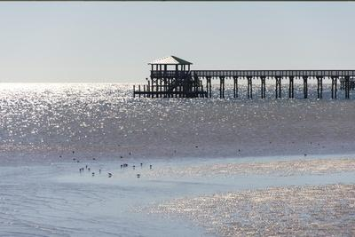 Mississippi, Bay St Louis. Shorebirds and Pier Seen from Marina