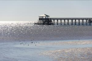 Mississippi, Bay St Louis. Shorebirds and Pier Seen from Marina by Trish Drury