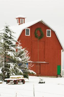 North America, USA, WA, Whidbey Island. Festive red barn in fresh snow by Trish Drury