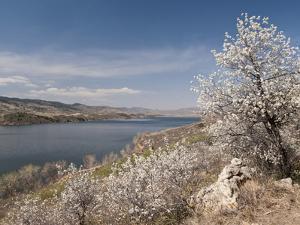 Serviceberry, Horsetooth Reservoir, Fort Collins, Colorado, USA by Trish Drury