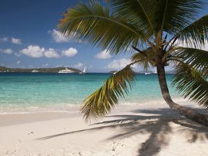 Tranquil White Sand Beach, St John, United States Virgin Islands, USA, US Virgin Islands, Caribbean by Trish Drury