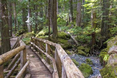 USA, WA, Olympic Mountains. Bridge over Lena Creek. Lena Lake trail Olympic National Forest.