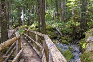 USA, WA, Olympic Mountains. Bridge over Lena Creek. Lena Lake trail Olympic National Forest. by Trish Drury