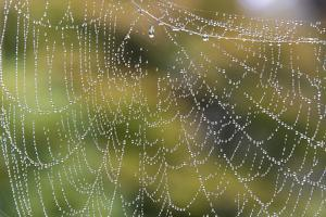 USA, WA. Raindrops Decorate Spider Web. Fall Color Backdrop by Trish Drury