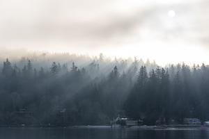 Washington State, Shafts of Morning Light Piercing Fog Make God Rays Through Trees by Trish Drury