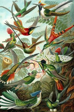 Trochilidae Nature Plastic Sign by Ernst Haeckel