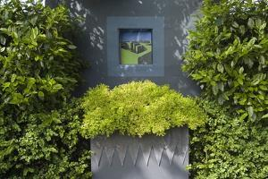 Trompe L'Oeil 'Window' on Wall Flanked by Laurel Hedge and Box Container