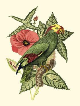 Tropical Birds and Botanicals I