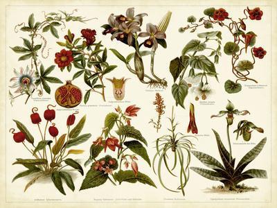 https://imgc.allpostersimages.com/img/posters/tropical-botany-chart-ii_u-L-PSSVF70.jpg?p=0