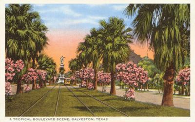 Tropical Boulevard, Galveston, Texas
