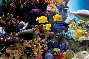 Tropical Fish & Coral