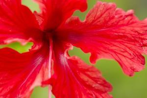 Tropical Flower, Costa Rica