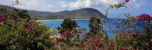 Tropical Flowers at the Seaside, Deshaies Beach, Deshaies, Guadeloupe