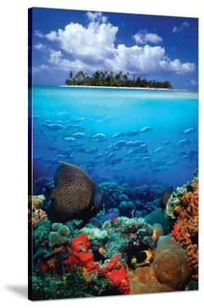 Tropical Scenery I