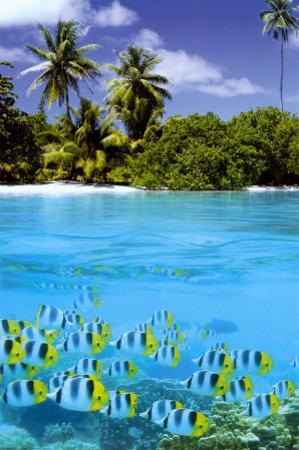 Tropical Scenery II