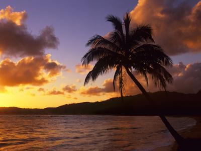 https://imgc.allpostersimages.com/img/posters/tropical-sunrise-on-the-garden-isle-kauai-hawaii-usa_u-L-PN6V0I0.jpg?artPerspective=n