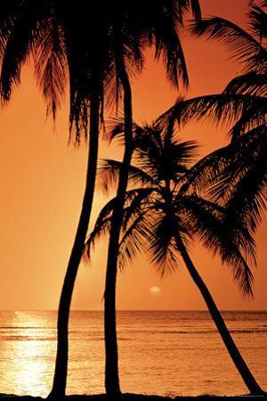 Tropical - Sunset