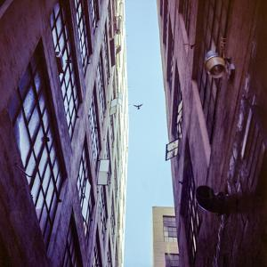 Bird Flying above the Buildings by Tuan Tran