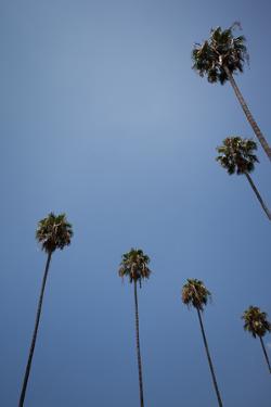Palm Trees by Tuan Tran