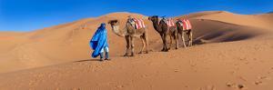 Tuareg Man Leading Camel Train in Desert, Erg Chebbi Dunes, Sahara Desert, Morocco