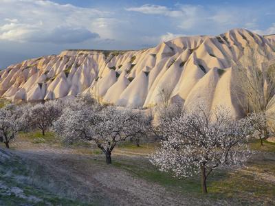 https://imgc.allpostersimages.com/img/posters/tuff-stone-erosion-near-uchisar-blossoming-trees-cappadocia-anatolia-turkey_u-L-Q11YLP90.jpg?p=0