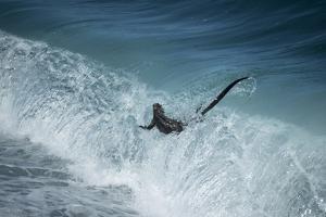 Marine iguana in surf, Fernandina Island, Galapagos by Tui De Roy