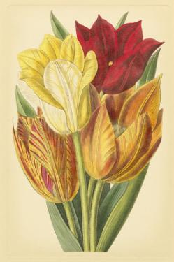 Tulip Array II