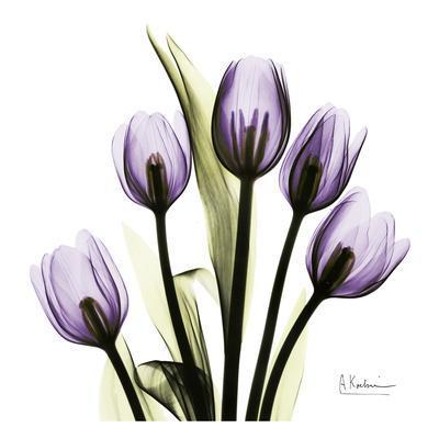 https://imgc.allpostersimages.com/img/posters/tulip-in-purple_u-L-F548FA0.jpg?p=0