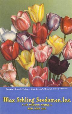 Tulip Seed Packet
