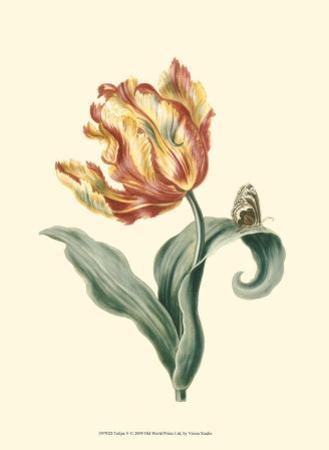 Tulipa V