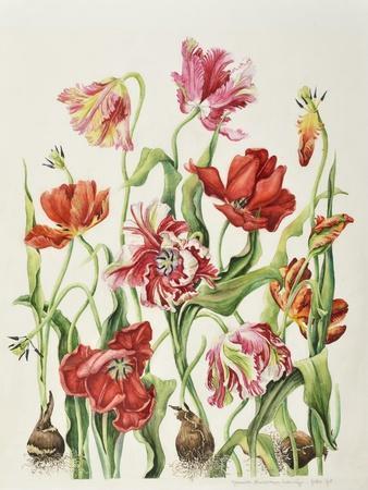 https://imgc.allpostersimages.com/img/posters/tulips-1601_u-L-Q1CABSH0.jpg?artPerspective=n