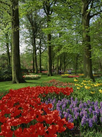 https://imgc.allpostersimages.com/img/posters/tulips-and-hyacinths-in-the-keukenhof-gardens-at-lisse-the-netherlands-europe_u-L-P7XDD80.jpg?p=0