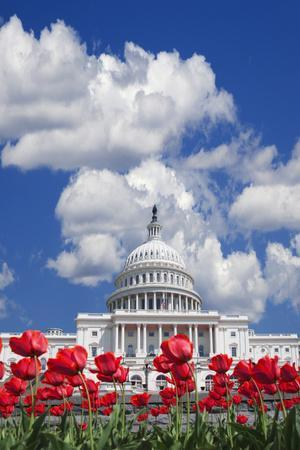 https://imgc.allpostersimages.com/img/posters/tulips-blooming-in-front-of-the-capitol-building-washington-dc-usa_u-L-PN6YJ30.jpg?p=0