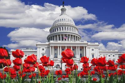 https://imgc.allpostersimages.com/img/posters/tulips-in-bloom-in-front-of-the-capitol-building-washington-dc-usa_u-L-PN6YJX0.jpg?p=0