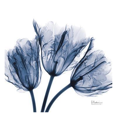 https://imgc.allpostersimages.com/img/posters/tulips-indigo_u-L-F8DZ1I0.jpg?p=0