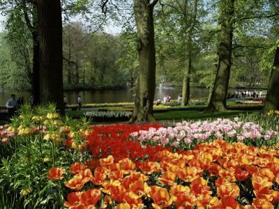Tulips, Keukenhof Gardens, Lisse, Holland by I Vanderharst