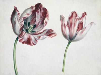 https://imgc.allpostersimages.com/img/posters/tulips_u-L-PUSZZ30.jpg?p=0