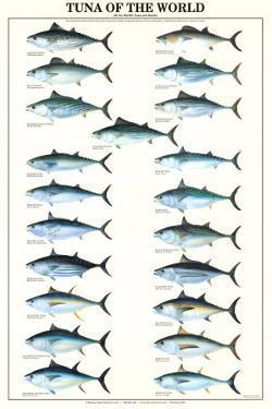 Tuna of the World