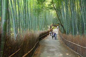 Kyoto, Japan - Green Bamboo Grove in Arashiyama by Tupungato