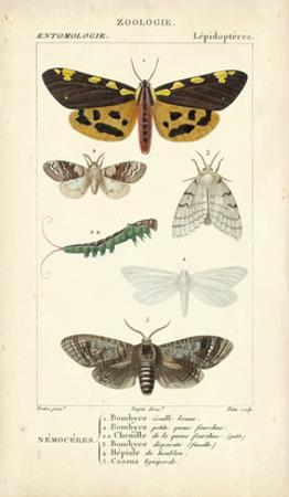 Antique Butterfly Study I