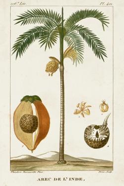 Turpin Exotic Palms V