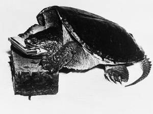 Turtle Playing Harmonica
