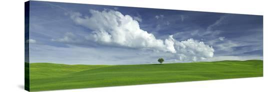 Tuscan Field Single Tree-Richard Desmarais-Stretched Canvas Print