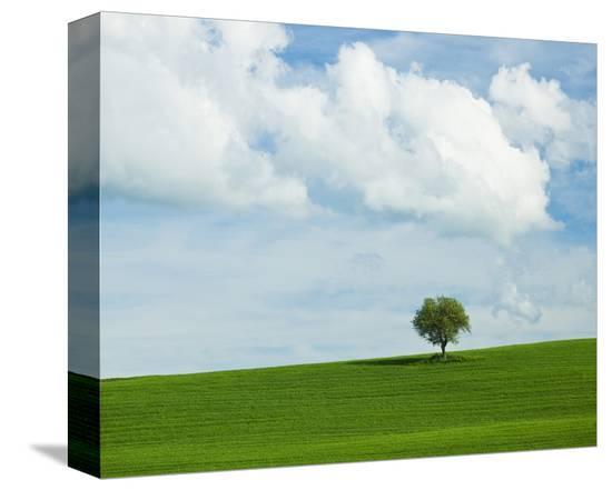 Tuscan Field Tree-Richard Desmarais-Stretched Canvas Print