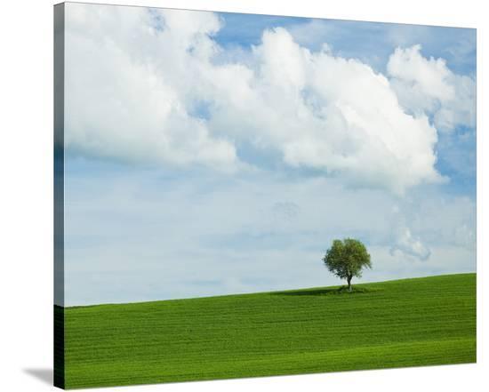 Tuscan Field Tree-Richard Desmarais-Stretched Canvas